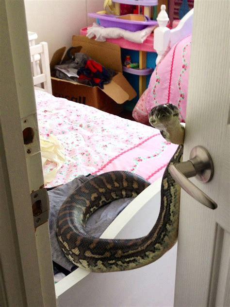 snakes   roof homeowner terrified  snake
