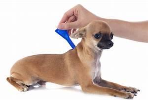 Hond behandelen tegen vlooien en teken