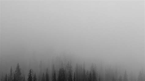 fog minimal mountain wood nature wallpaper