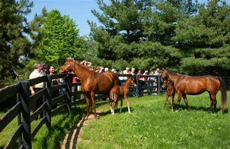 horse kentucky farm lexington ky park derby boyd tours near tour watermelon chadwick juleps recipe hotel lex