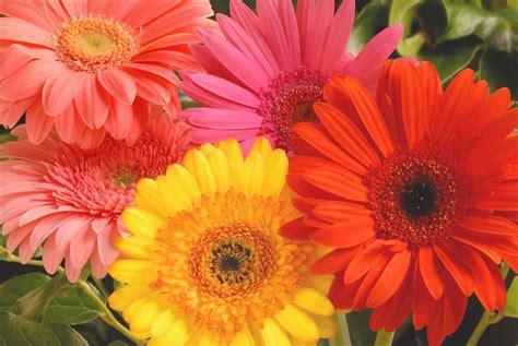 eddilisa s blog gerber daisy bridal bouquet