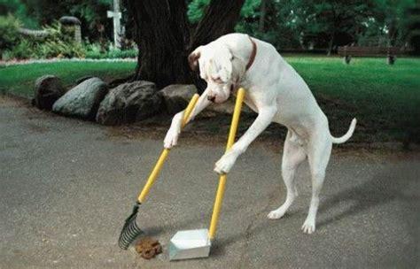 self scooping litter box mon chien mange caca crottes ou autres excréments