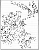 Coloring Peony Flowers Drawing Adult sketch template
