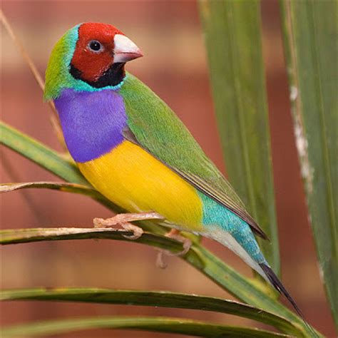 most colorful birds ellergy the world s most colorful bird