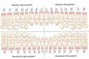 Dental Charting At Uei College