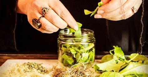 herbal medicine making natural medicine classes  york