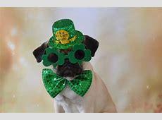 St Patrick's Day Dog Parade 2018