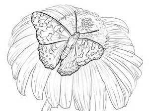 painted lady butterfly sits   flower coloring page