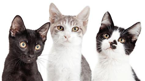 waschbär und katze katzen erziehen tipps katzen erziehen wie und was mu ich beachten katze alu folien trick hilft