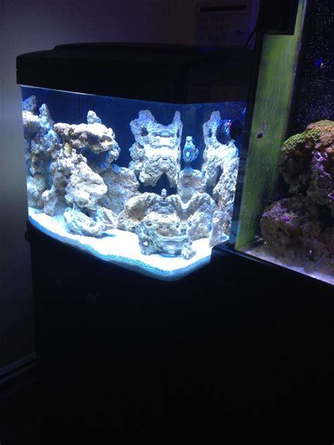 29 gallon bio cube fish tank