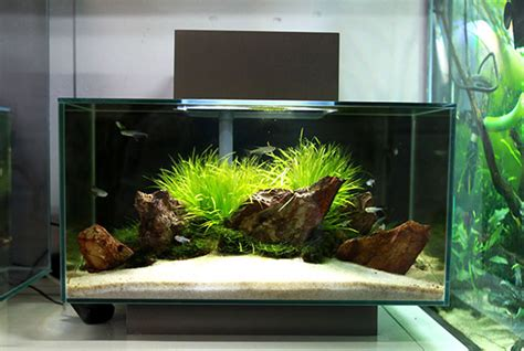 Fluval Edge Aquascape by Pin By Joni Solis On Planted Nano Aquariums