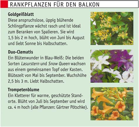 Sonnenschutz Für Den Balkon by Balkon Sonnenschutz Sichtschutz Selbst De