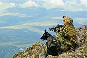Navy Seal Weapons Navy Seal Military Working Dog