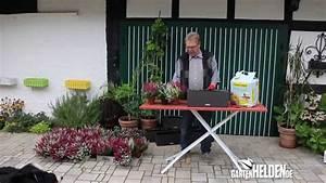 Rettungsleitern Für Den Brandfall : video blumenk sten f r den herbst und winter gestalten ~ Lizthompson.info Haus und Dekorationen