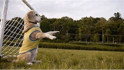 Playing Soccer Dog Hund Torwart Puedes Perros