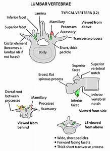 Instant Anatomy - Head And Neck - Areas  Organs - Vertebral Column