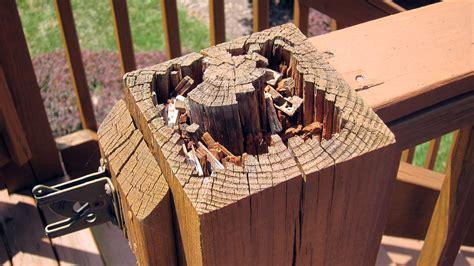 treated lumber  rot  build  tribune