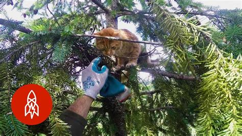 rescuing cats  super tall trees funnycom