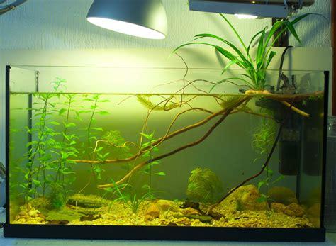 plantes qui filtrent bien l eau pour un bac no tech de 10 litres