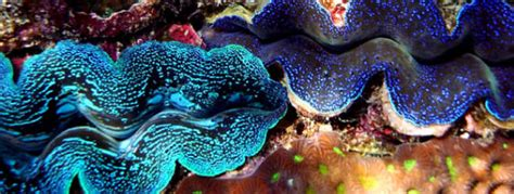 chambres de culture guide thaïlande coraux et fonds marins