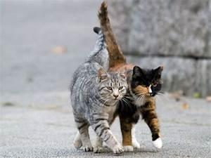 Balkonschutz Für Katzen : streuner aufnehmen was f r und gegen wild lebende katzen spricht ~ Eleganceandgraceweddings.com Haus und Dekorationen