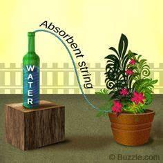 survival tips for indoor house plants while on vacation With katzennetz balkon mit aqua garden hauswasserwerk