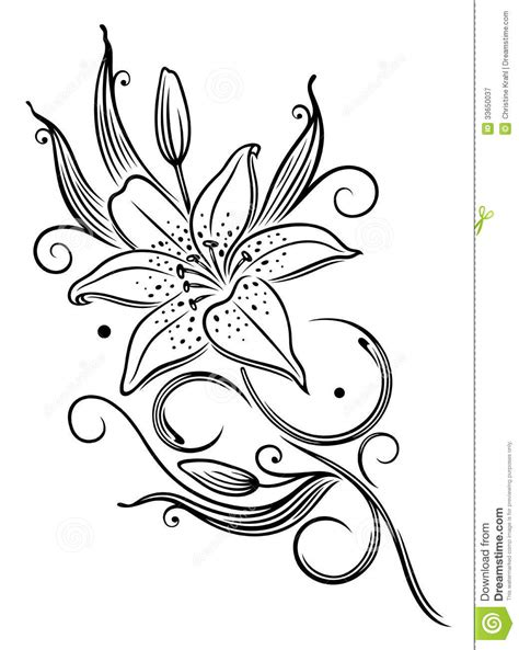 lily flower stock vector illustration  floral curled