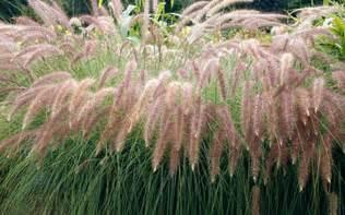 landscaping company  dubai grass landscape service uae