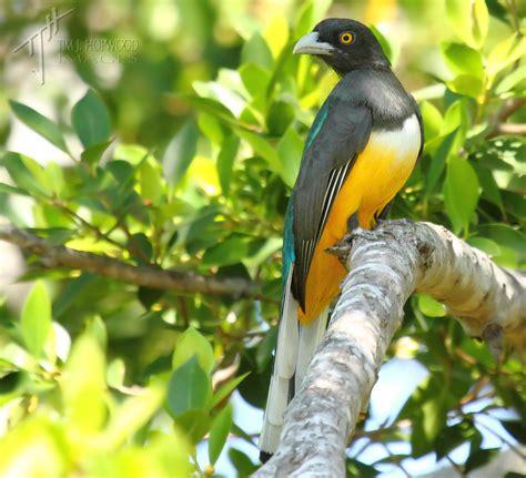 birds  mexico part  tim  hopwood images