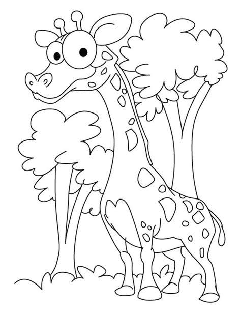 Coloring Jerapah by Desenho De Girafa Para Imprimir