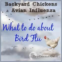 ... ®: Backyard Chickens & Avian Influenza: What to Do About Bird Flu Avian Influenza
