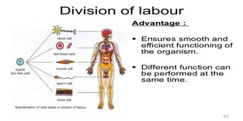 division  labour assignment point
