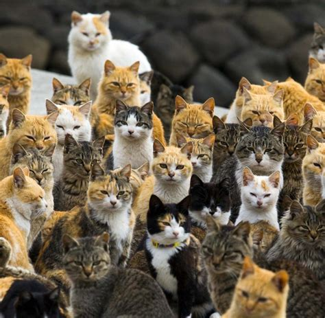 die insel der katzen wird zum touristen highlight welt