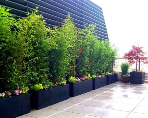 pflanzen sichtschutz terrasse bambus pflanzen schwarze k 252 beln reihe terrasse balkon