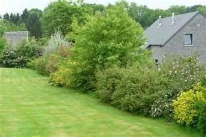 Haie Sans Entretien. jardin sans entretien conseils astuces et ...