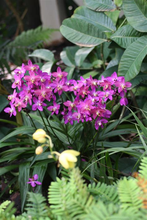 8 Heat Tolerant Plants For Containers