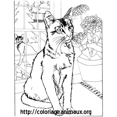chat assis coloriage chat assis sur coloriage animaux org
