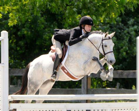 welsh cob jumping disciplines breeds trakehner these horse jump horses