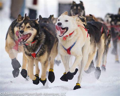 Dog Sledding in Alaska — Planet Earth Adventures - Alaska ...