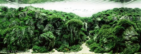 Aquascaping Inspiration by Aquascaping Inspiration Tips And Tricks Aquascapinglove