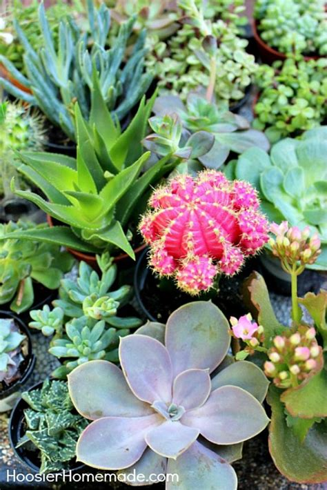 outdoor succulent plants how to build and plant a succulent garden hoosier homemade