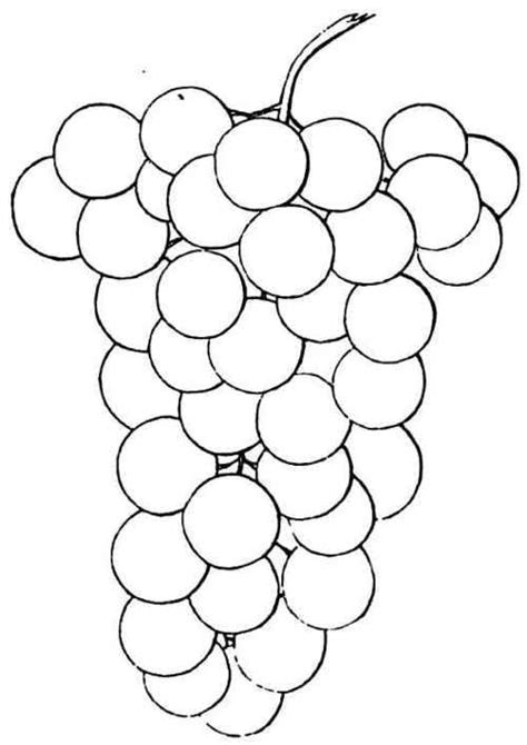 coloring pages grapes drawings  grapes colouring pages page  kids art  daycare