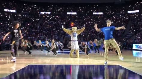byu mascot cosmo  cougar captivated  crowd