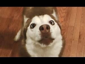 "Cute Cross Eyed Dog says ""Hello""! - YouTube"