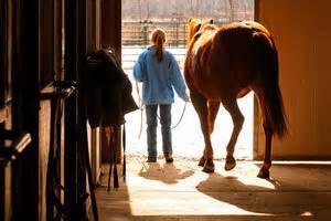Reifen Umziehen Kosten : ankunft des neuen pferdes im stall hilfreiches ~ Orissabook.com Haus und Dekorationen