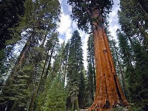 10 Of The Oldest Living Trees In The World