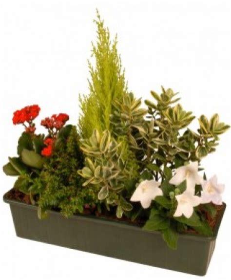 Plante De Jardinière by Livraison Fleurs Deuil Jardini 232 Re De Plantes Pour