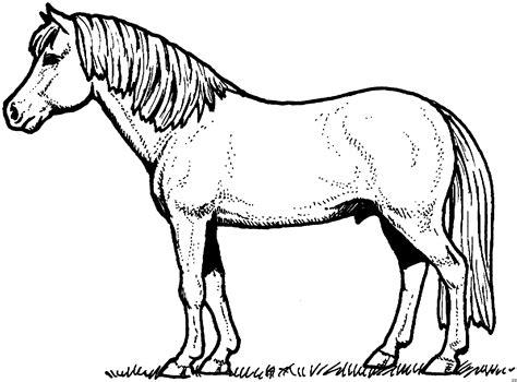 schoenes pferd  ausmalbild malvorlage tiere