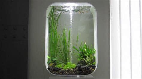 fische für 60 liter aquarium biorb 60 aquarium