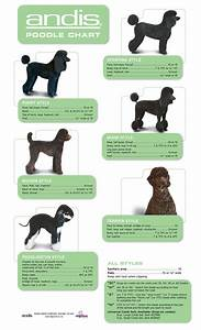 Andis Poodle Chart Pin By Serina Allen On Po Pos Dog Grooming Dog Grooming